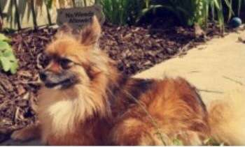 Dog stolen in home burglary #PetTheftReform