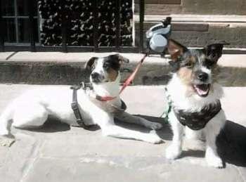 Two dogs stolen from outside Tesco in Edinburgh #PetTheftReform