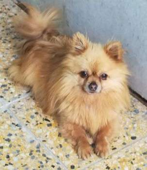 Police re-appeal for help to find stolen dog Benny from Tring  #PetTheftReform