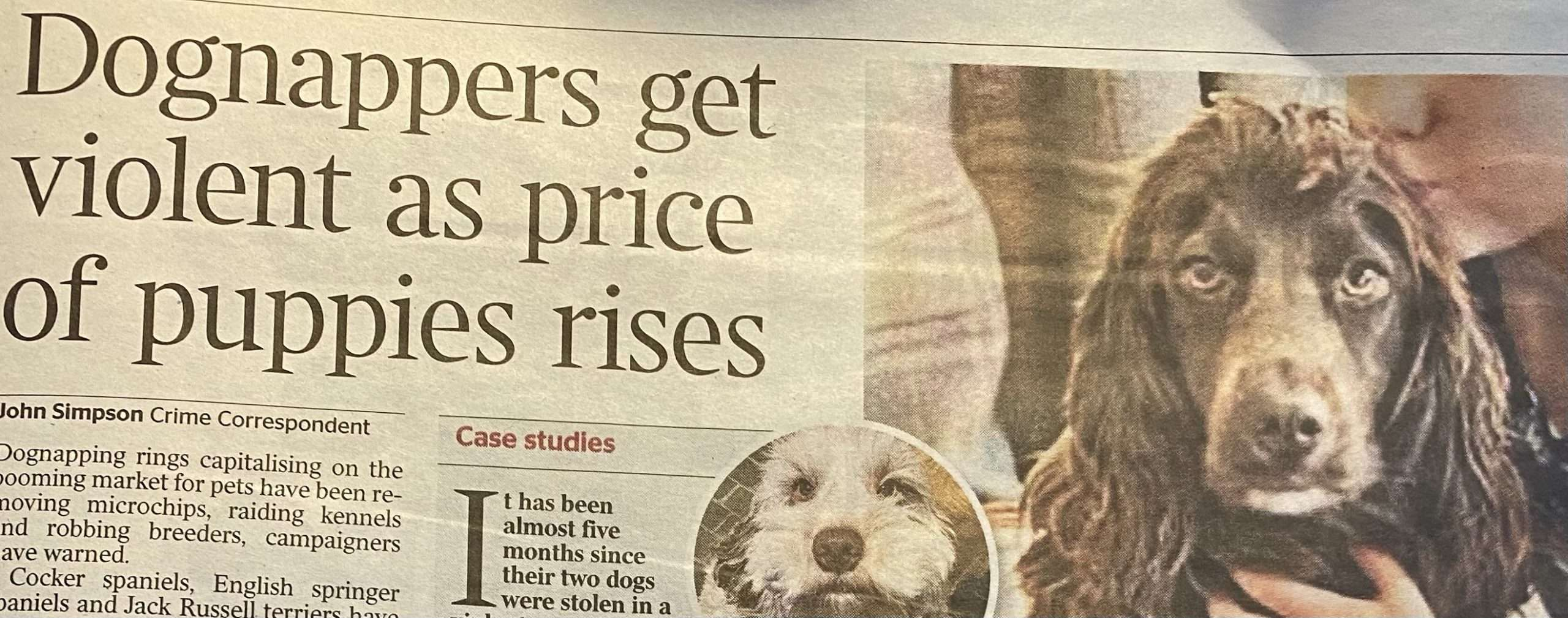 Dognappers get violent as price of puppies rises.