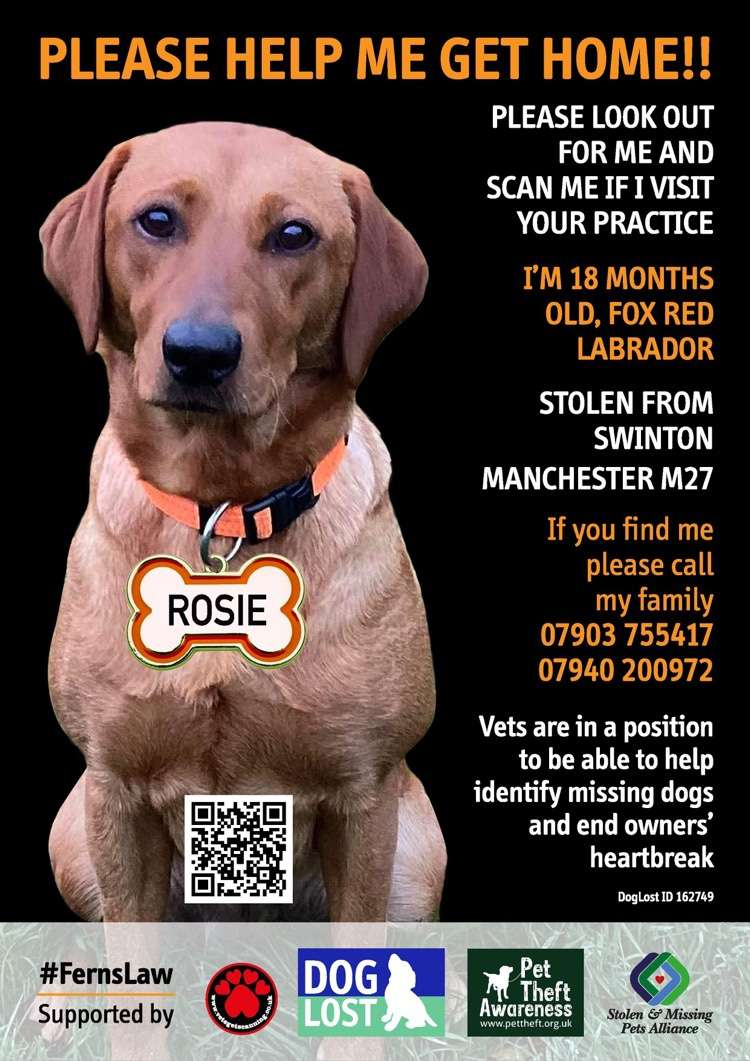 Appeal from stolen Rosie's family asking veterinarians to check microchips at first treatment to reunite missing pets #PetTheftReform #FernsLaw