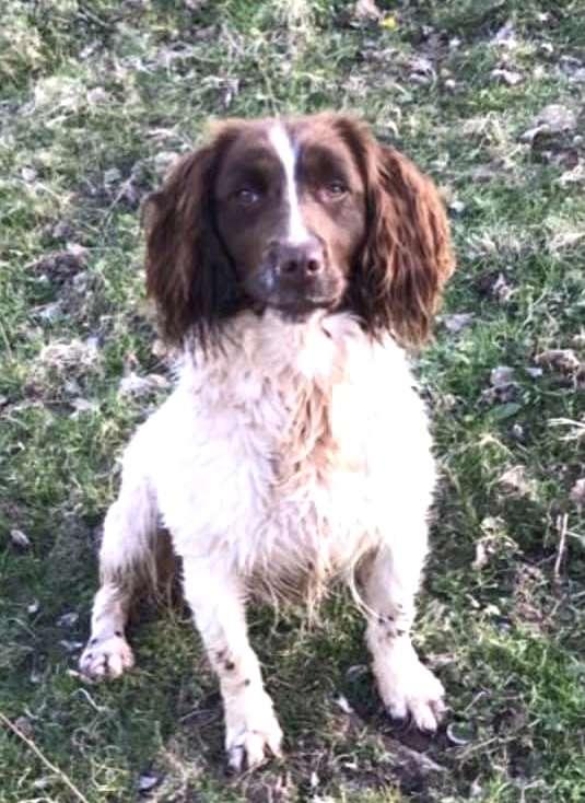 Stolen dog reunited, found 46 miles away from home #PetTheftReform