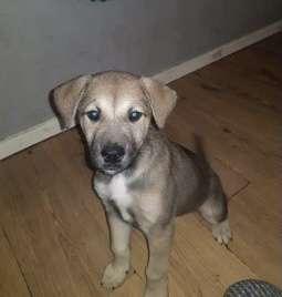 Is puppy Rio in Northamptonshire? #PetTheftReform
