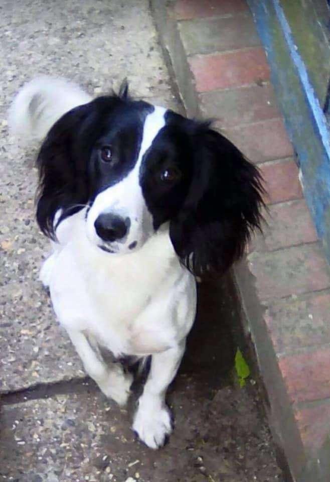 My dog has been stolen from Godstone, Surrey on 22nd January 2021 #PetTheftReform