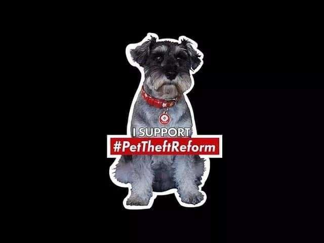 Myth Busting by our Patron Dr Daniel Allen #PetTheftReform