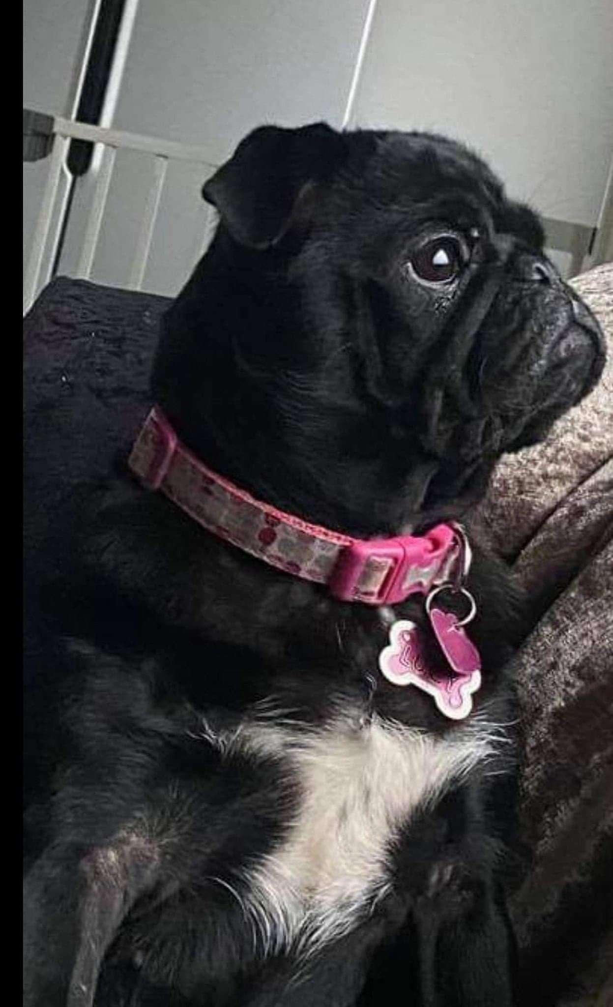 Kind stranger donates £1,000 to search for disabled girl's beloved dog in Rotherham #PetTheftReform