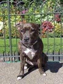 Mum and puppies stolen, London #PetTheftReform