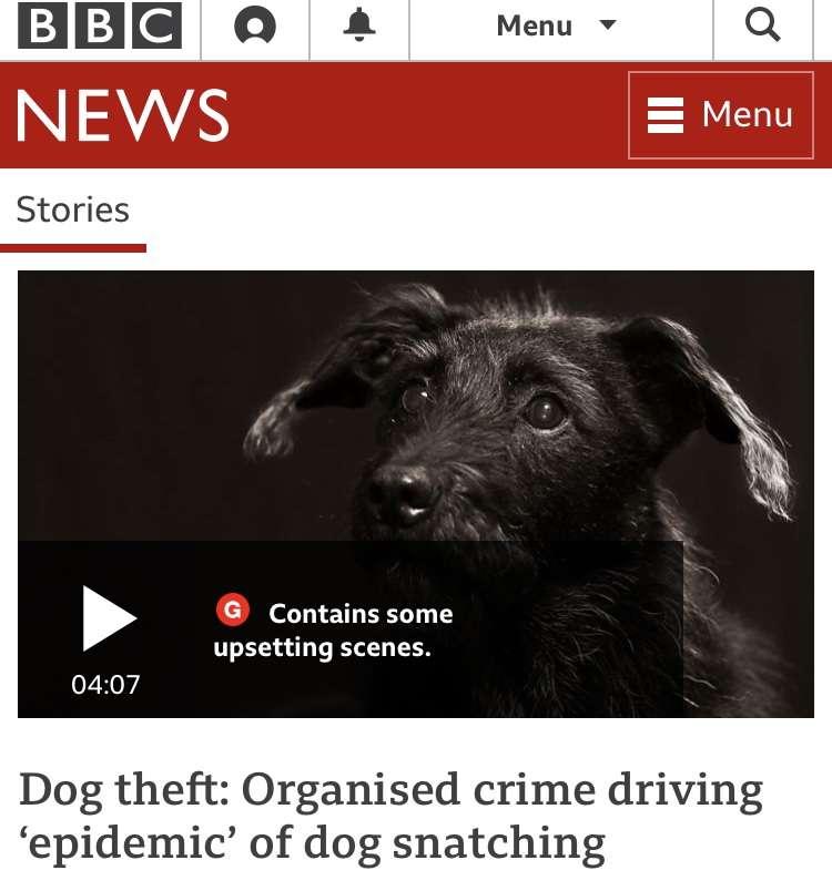 Dog theft: Organised crime driving 'epidemic' of dog snatching #PetTheftReform #FernsLaw