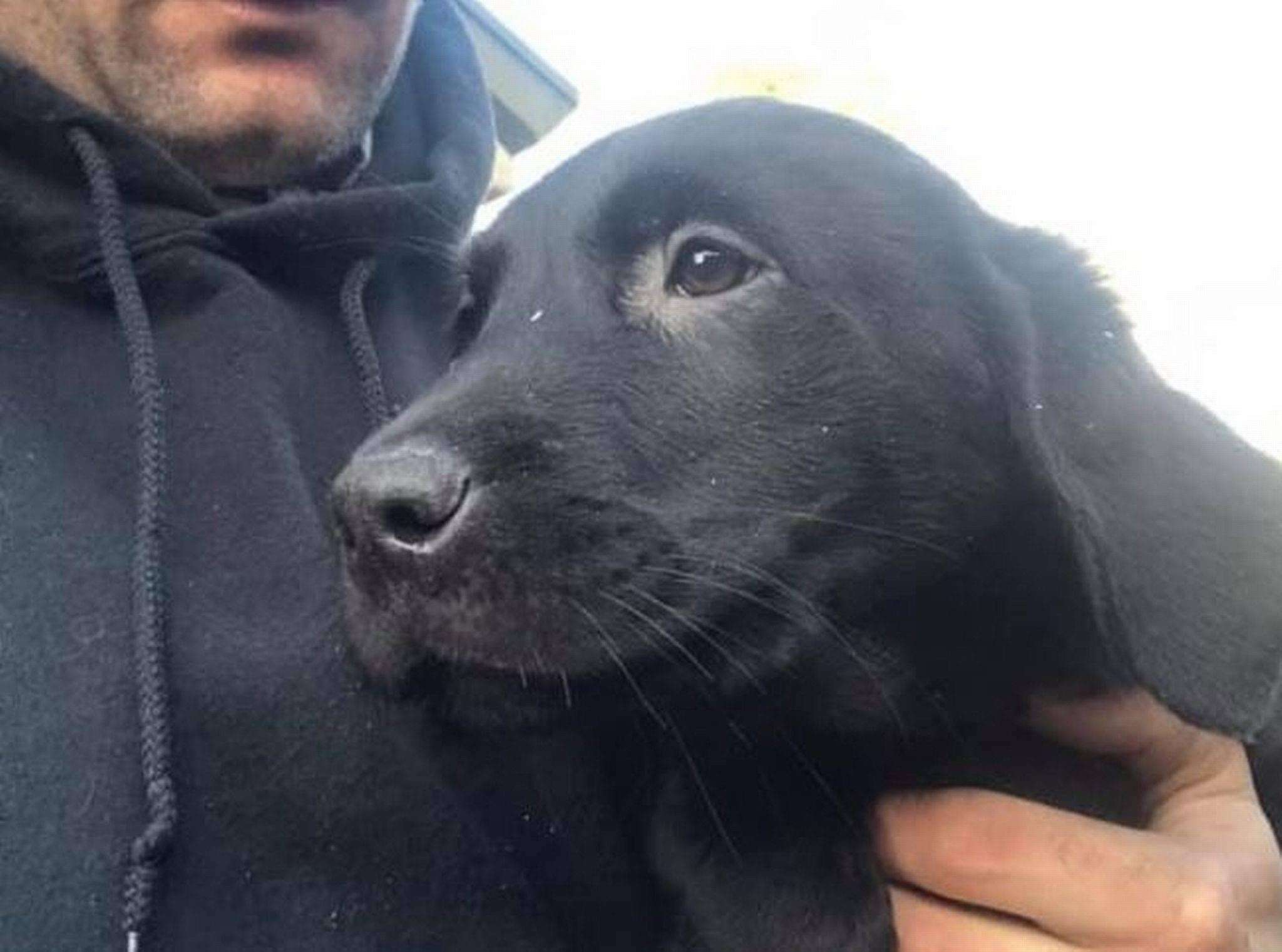 Families left 'devastated' as dogs and puppies stolen in separate overnight thefts #PetTheftReform