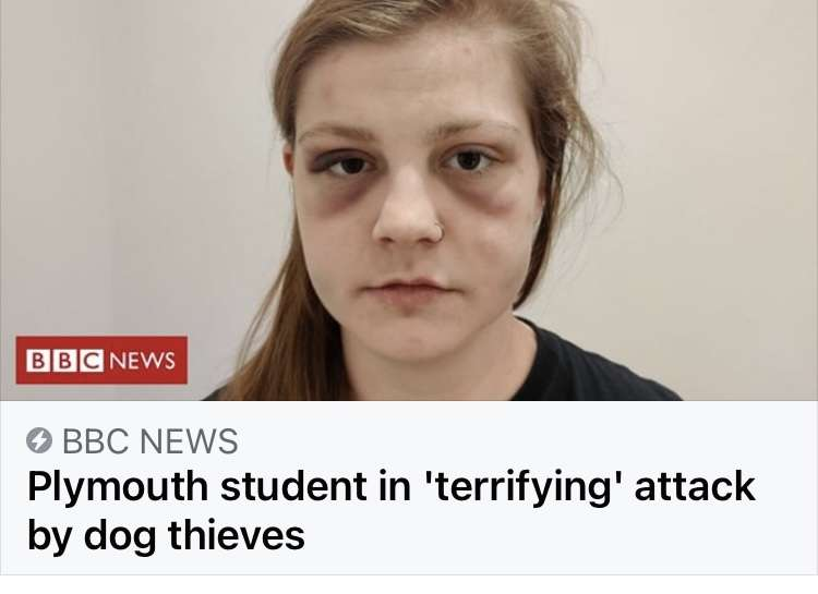 Plymouth student in 'terrifying' attack by dog thieves #PetTheftReform