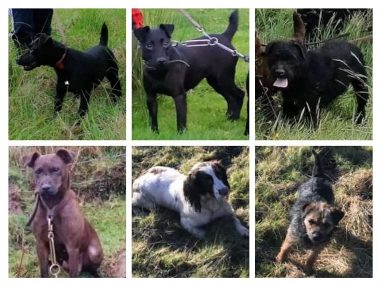 Family left 'heartbroken' after six dogs stolen overnight #PetTheftReform