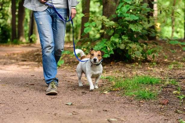 Dog owners warned to be vigilant in Cambridgeshire after rise in nearby thefts #PetTheftReform