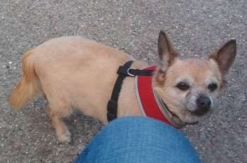 1,100 Hackney residents join search for widow's lost dog as it's her 'only companion' #PetTheftReform