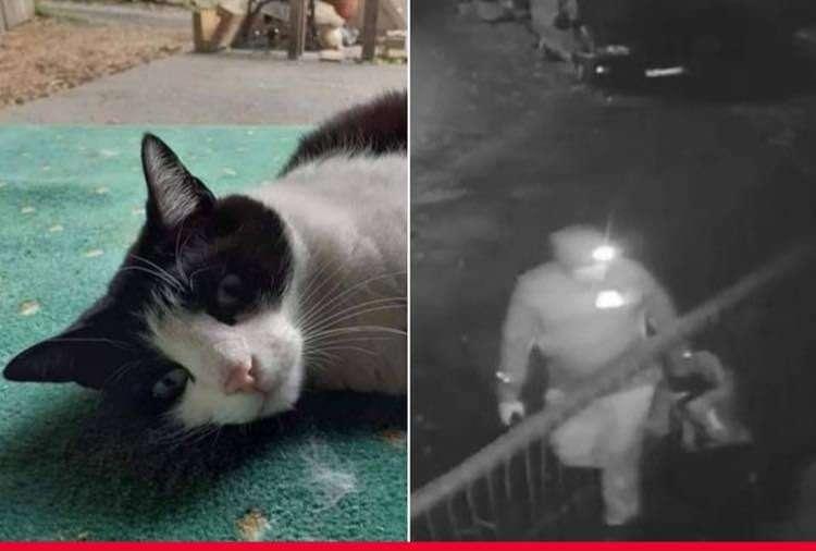 CCTV of beloved cat 'thrown over bridge to die' released by family to catch culprit #PetTheftReform