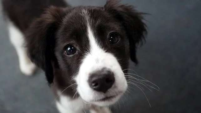 IRELAND: The Dáil is to consider a motion to increase the penalties for the theft of pets #PetTheftReform