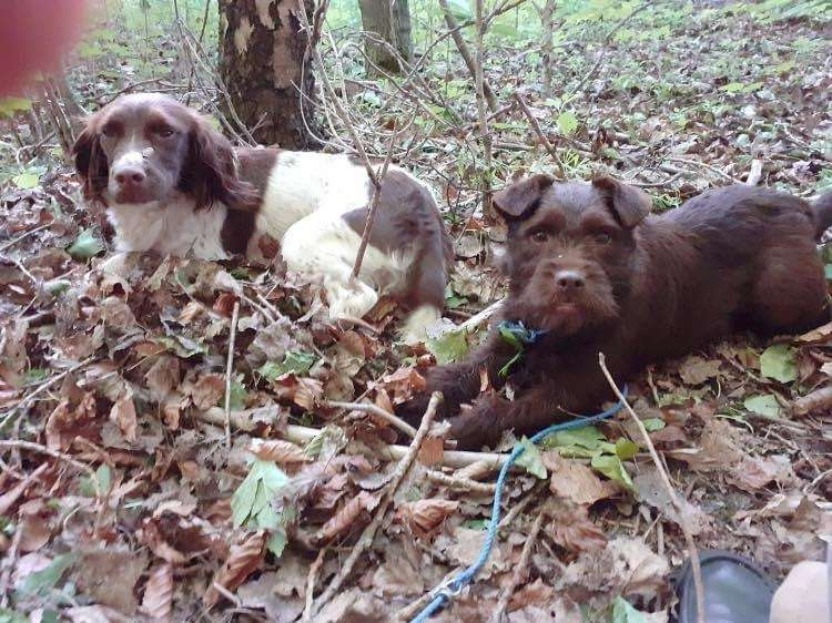 TWO DOGS STOLEN from an elderly gentleman, these dogs are his life #PetTheftReform