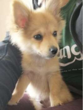 PUPPY RIO STOLEN AT KNIFE POINT